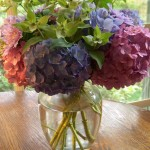hydrangea on cttage table
