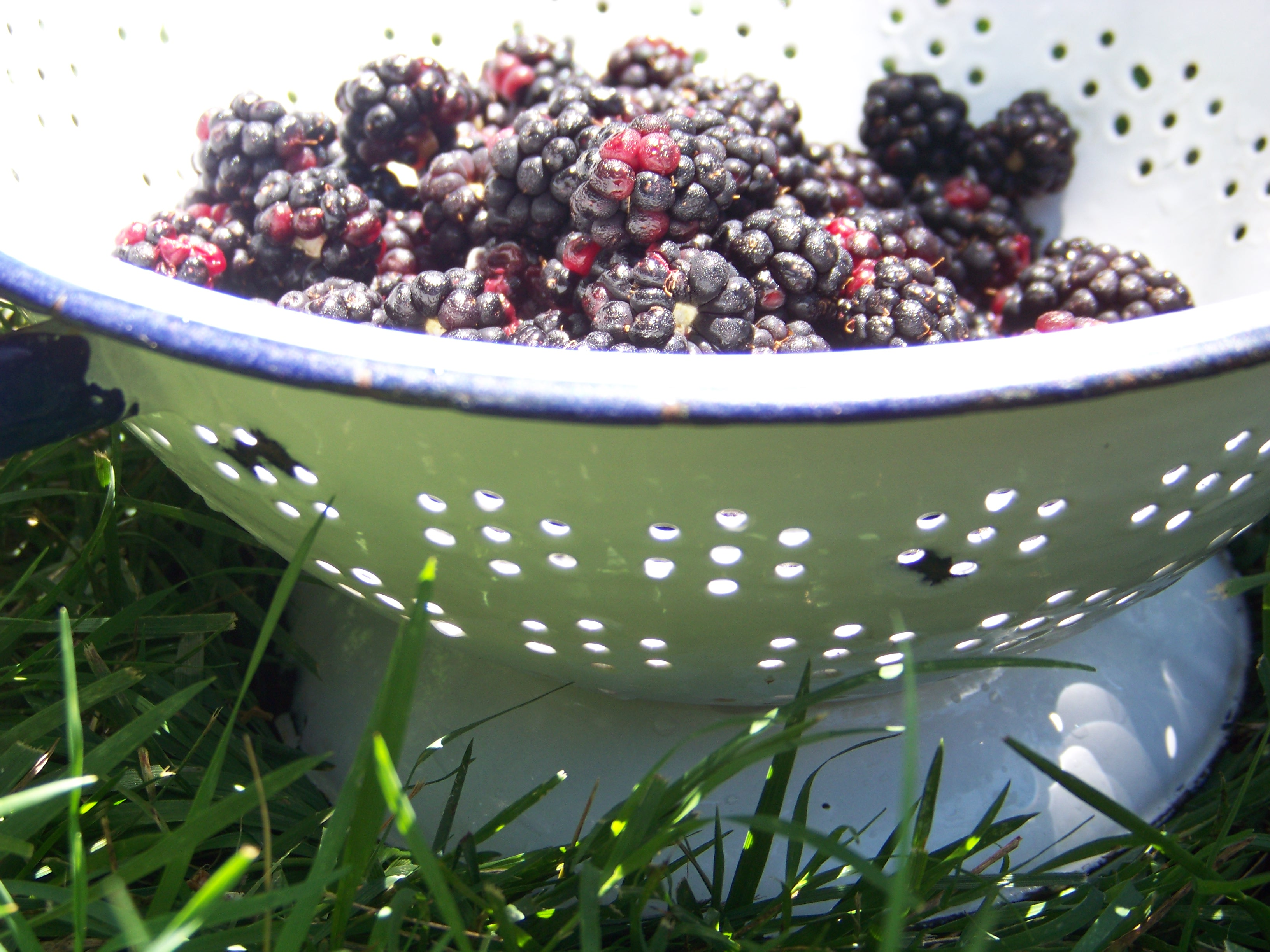 summer berries in a vintage colander