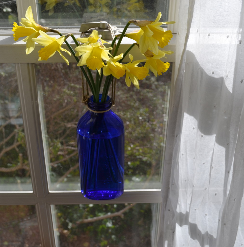 Blue bottle with Daffodils hanging on the window.