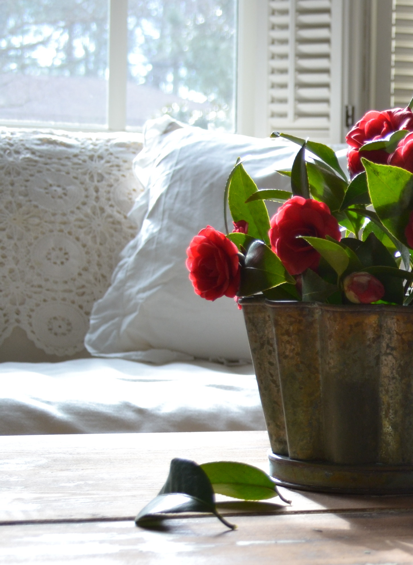 warm whites, camellias from the garden, and a vintage crochet throw