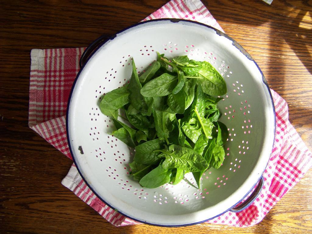 garden spinach in a vintage colander