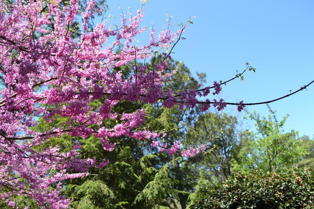 Spring garden sampler