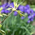 sunny garden days — Tuesday