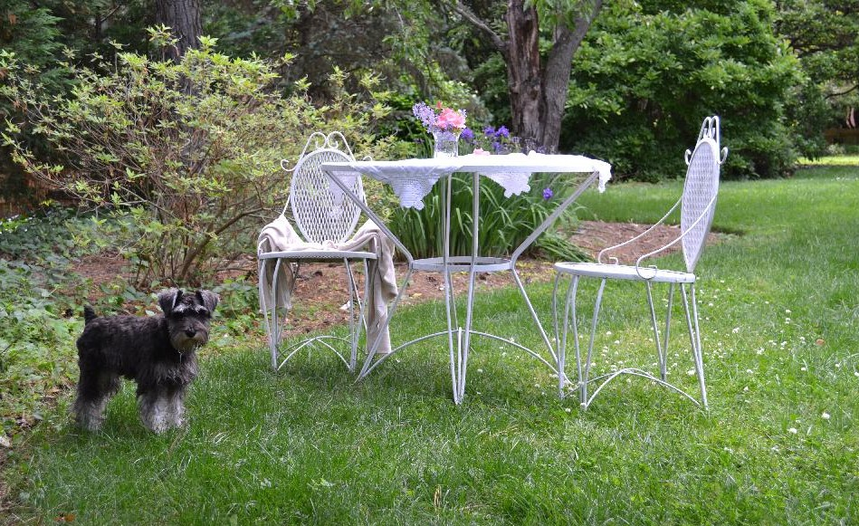 Paisley and a vintage garden table in the garden