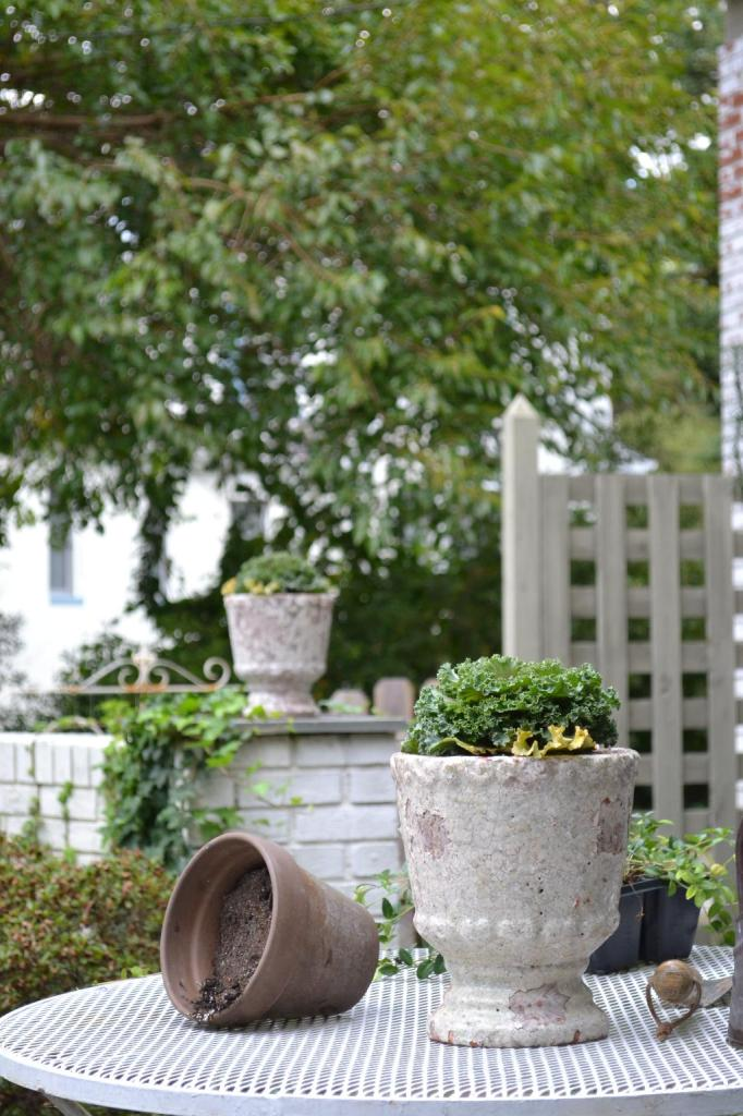 Cottage Fix blog - cottage garden in the fall with chippy clay pots and cabbages