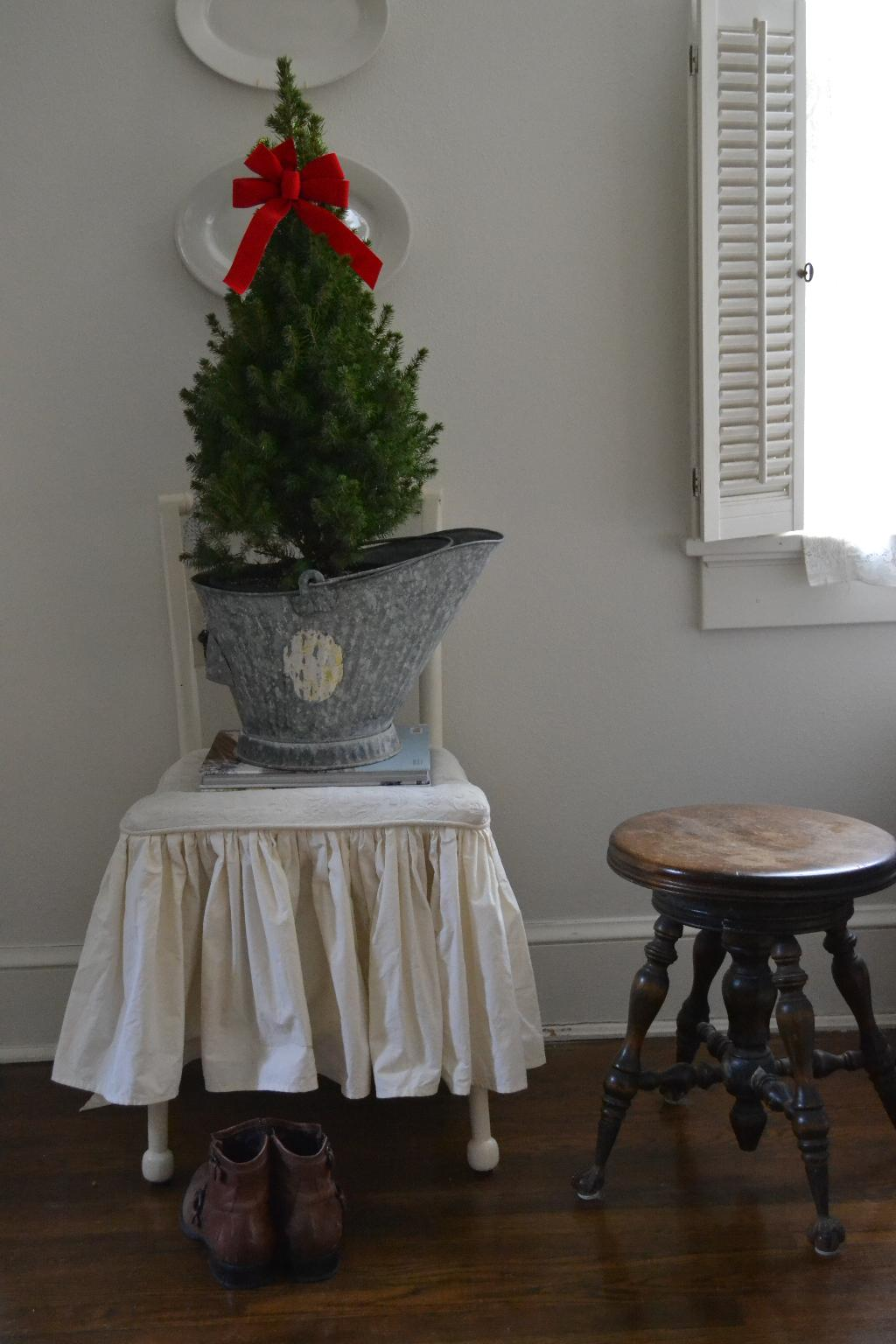Cottage Fix - potted dwarf Alberta spruce