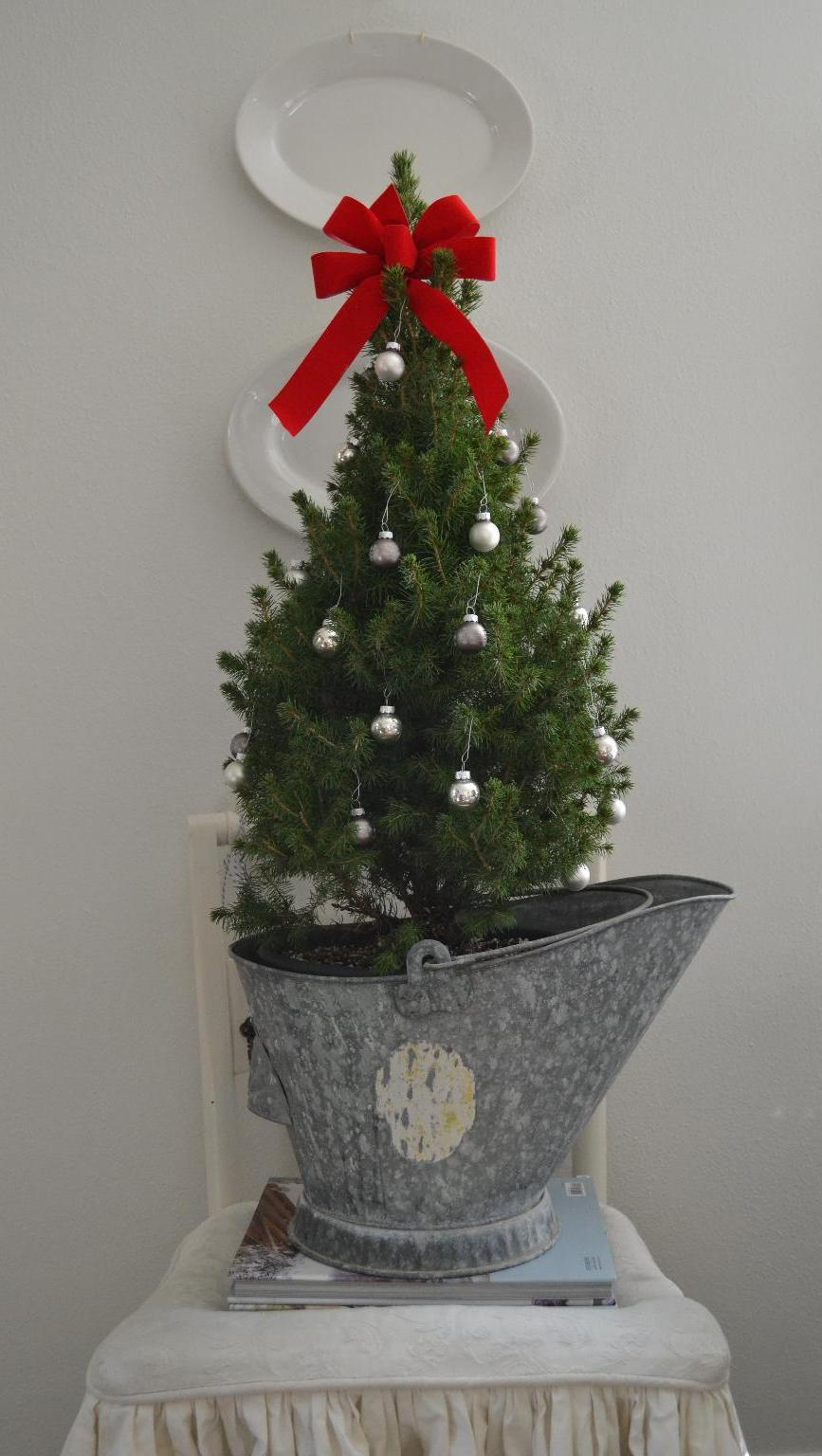 Cottage Fix - Christmas tree adorned with silver ornaments in a galvanized ash bucket