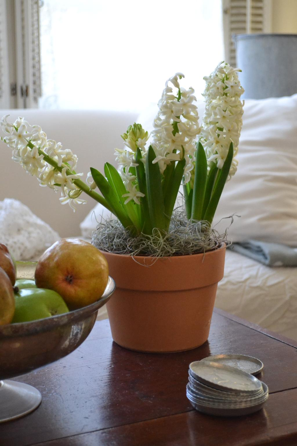 Cottage Fix - white hyacinth