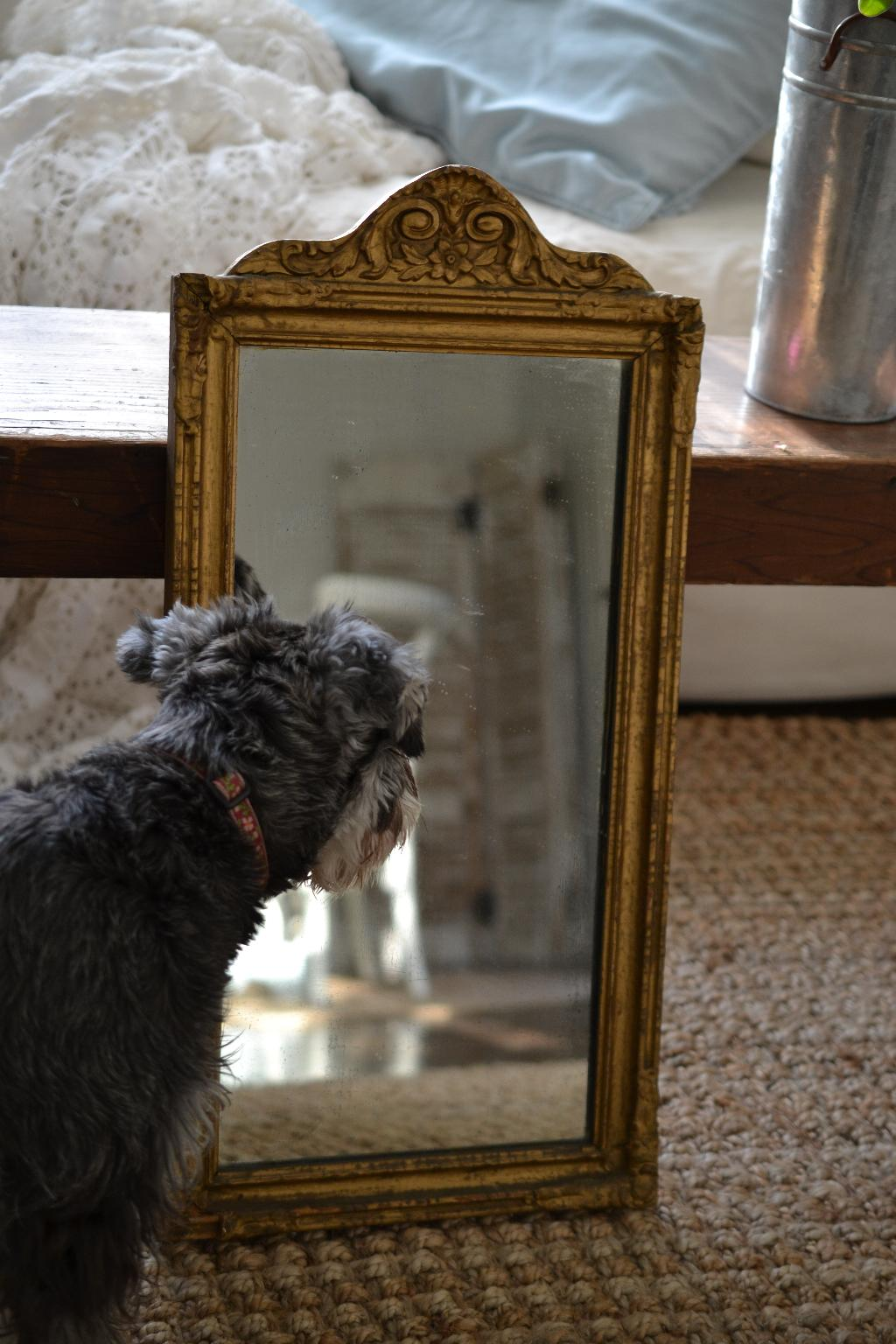 Cottage Fix - Paisley looking into the mirror