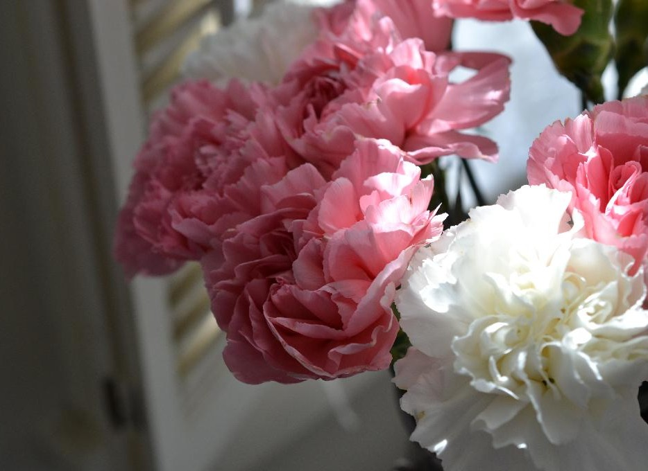 Cottage Fix - pink and white carnations