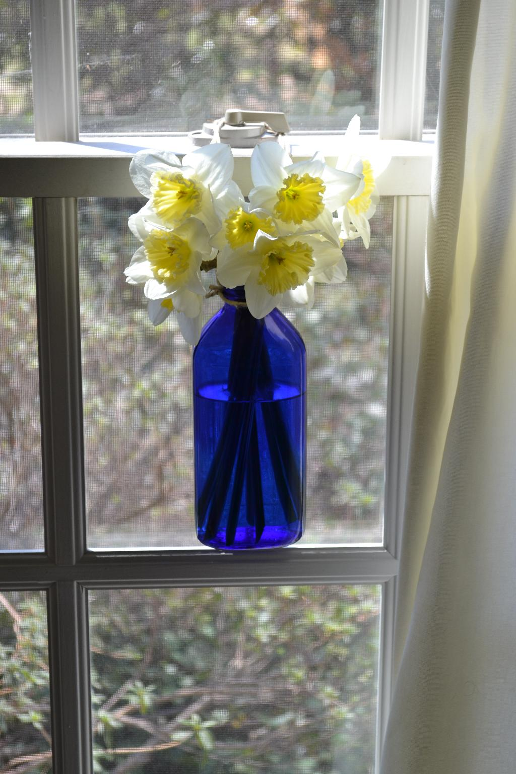 Cottage Fix - blue BROMO bottle and daffodils