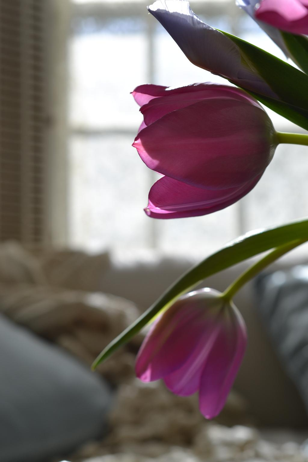 Cottage Fix - pink tulips