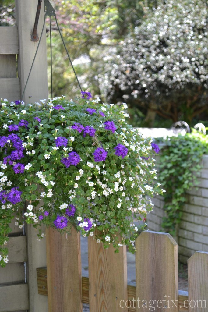Cottage Fix blog - cottage garden hanging basket