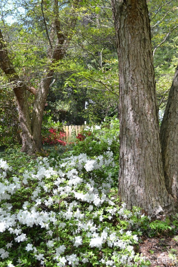 Cottage Fix blog - cottage garden in the spring with flowering shrubs