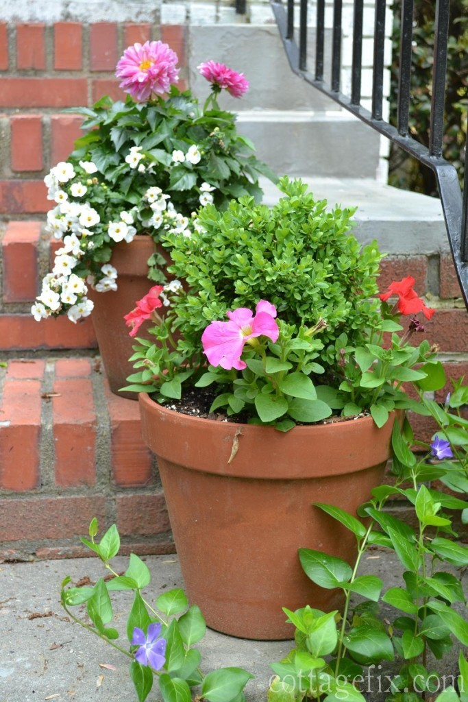 Cottage Fix blog - cottage garden potted plants and flowers