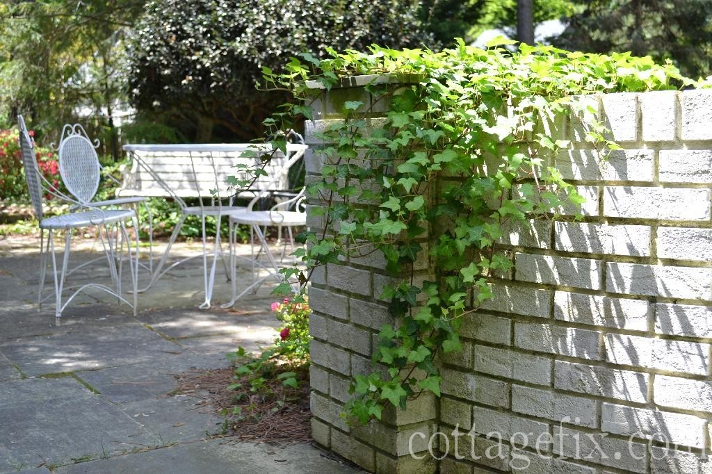Cottage Fix blog - ivy in the cottage garden