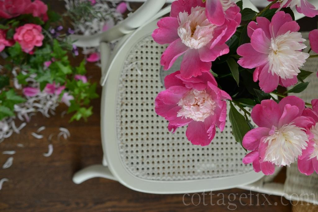 Cottage Fix blog - bright pink peony blooms