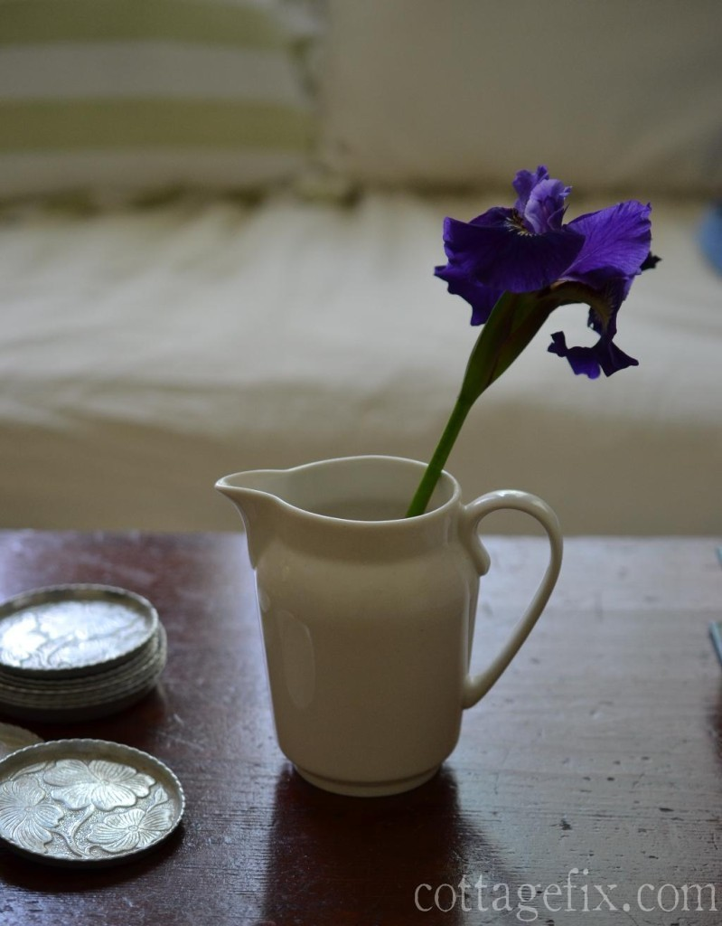 Cottage Fix blog - white pitcher and purple iris bloom