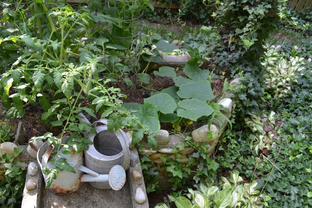 Cottage Fix blog - my silly summer vegetable garden