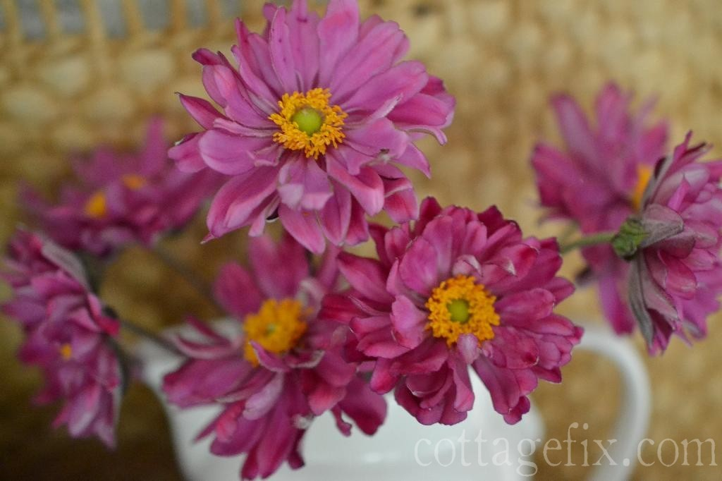 Cottage Fix blog - hot pink garden blooms