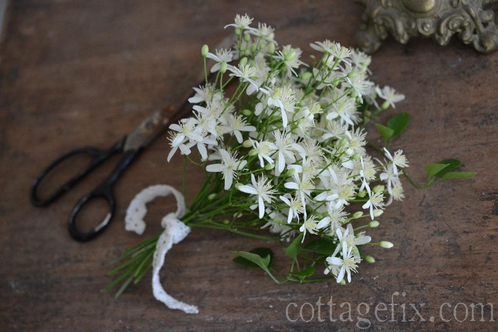 Cottage Fix blog - autumn clematis fairy bouquet