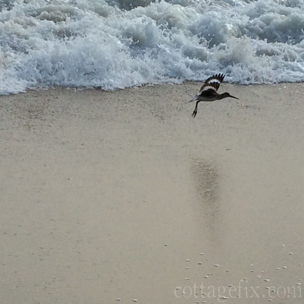 Cottage Fix blog - a sandpiper fleeing from a crashing wave