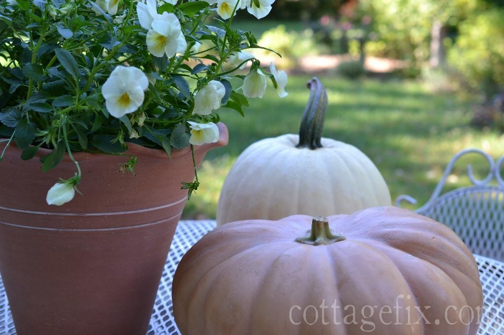 Cottage Fix blog - pale yellow pansies and pumpkins