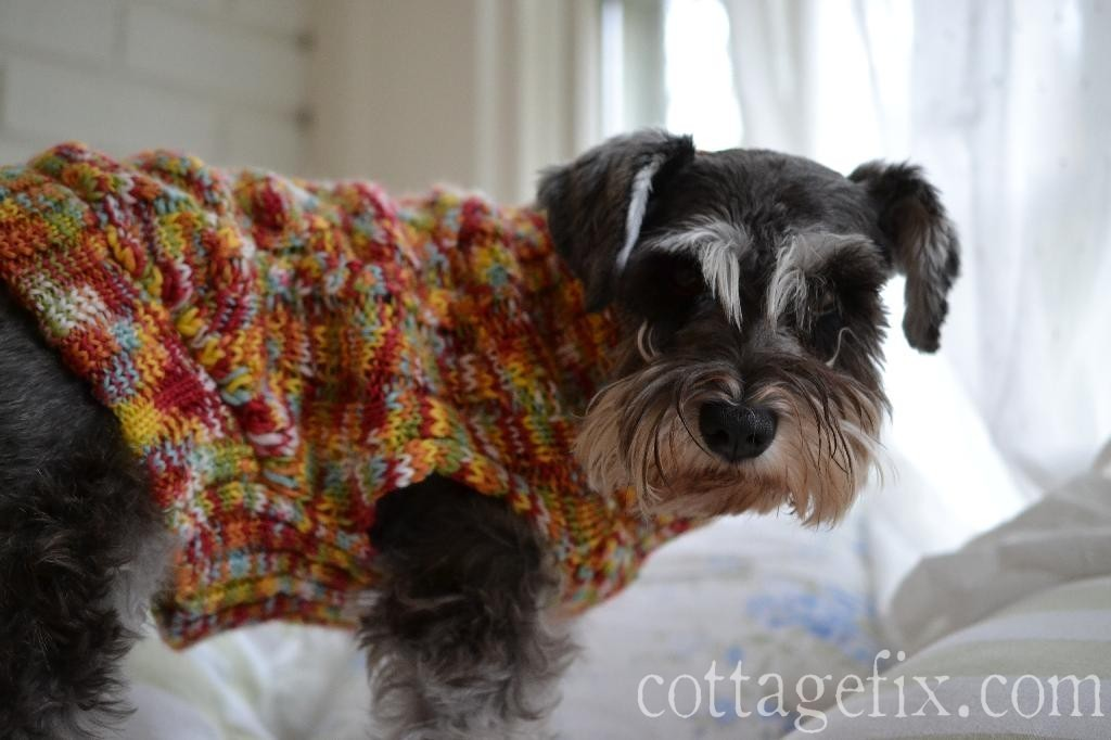 Cottage Fix blog - Miss Paisley sporting her fall sweater