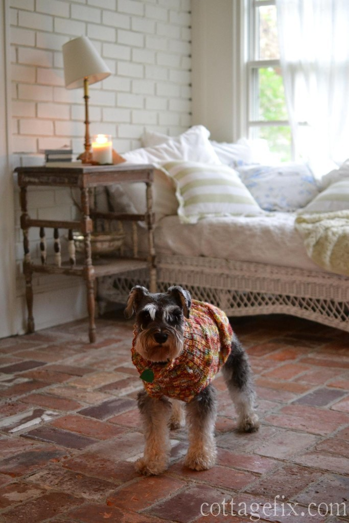 Cottage Fix blog - Miss Paisley the miniature schnauzer sporting her fall sweater