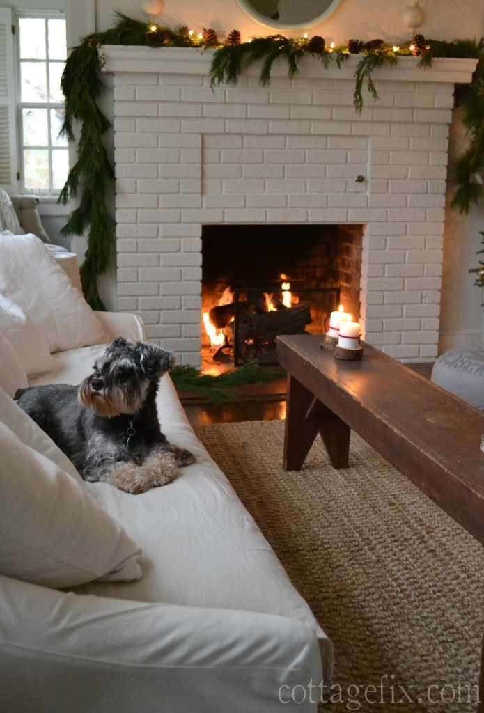 Cottage Fix blog - Paisley in the living room sitting by the fire