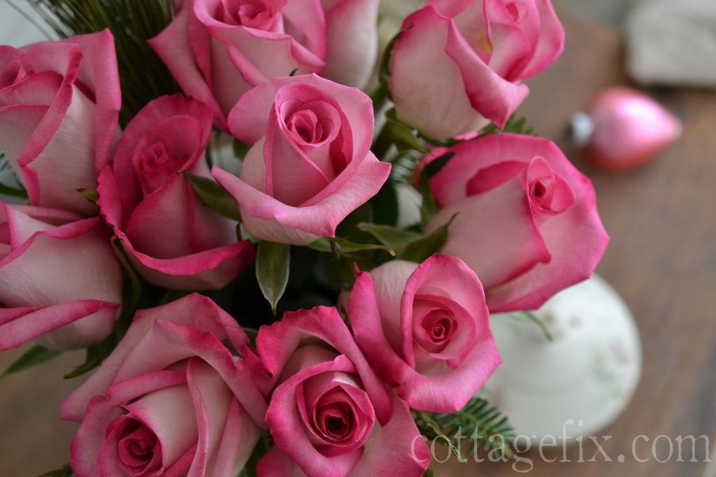 Cottage Fix blog - bright pink roses