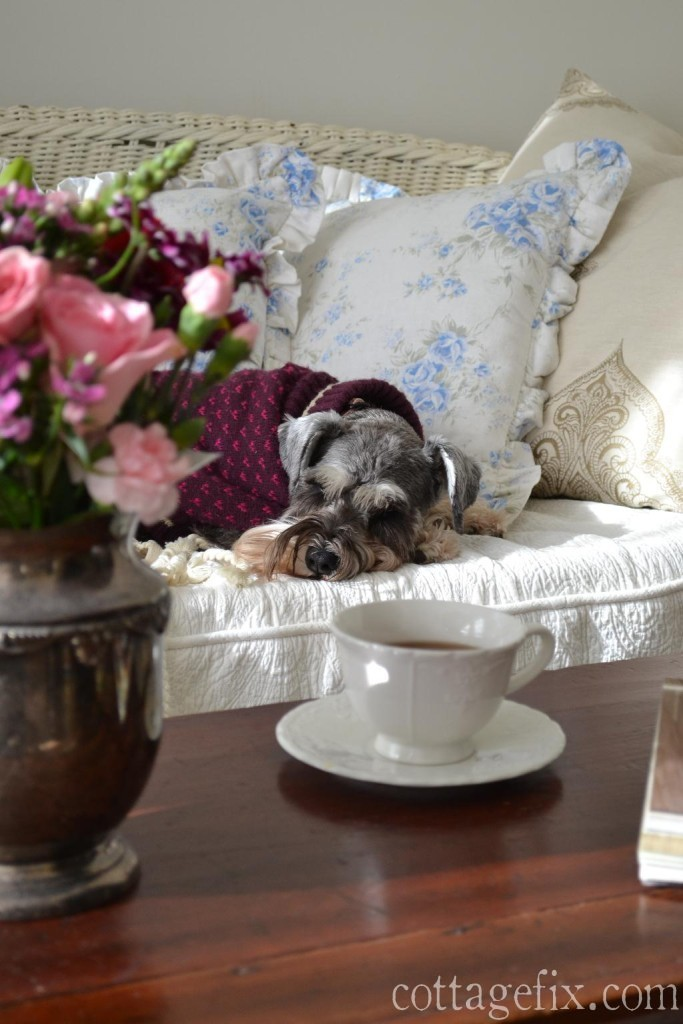 Cottage Fix blog - our salt and pepper schnauzer and a posy