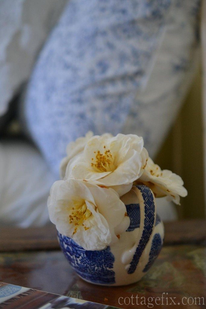 Cottage Fix blog - winter blooming camellias