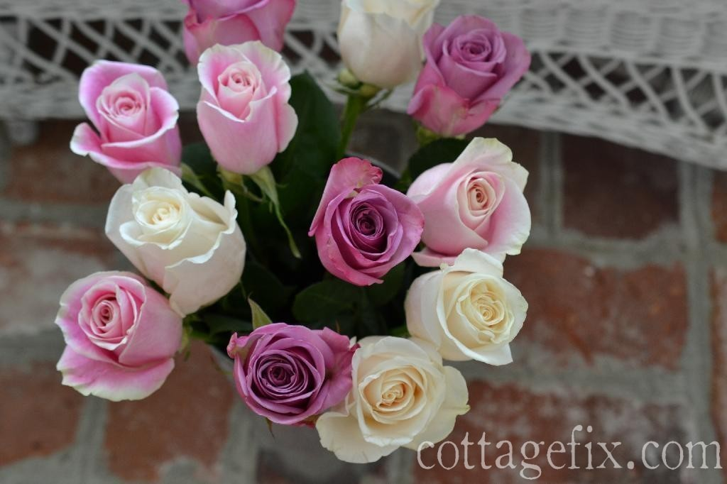 Cottage Fix blog - rainbow pastel roses