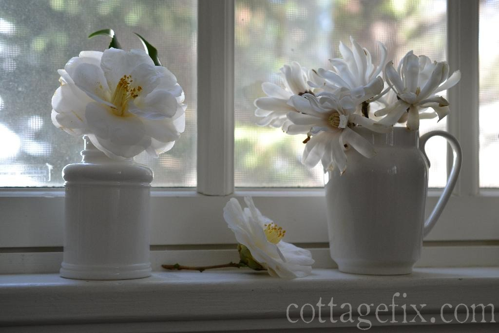 Cottage Fix blog - white blooms in white containers