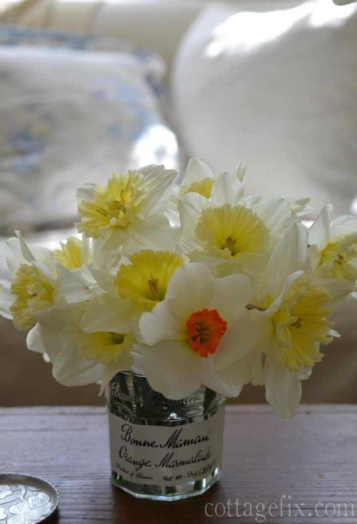 Cottage Fix blog - Spring daffodils