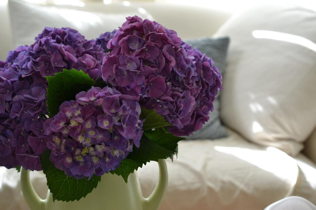 Cottage Fix blog - purple hydrangea