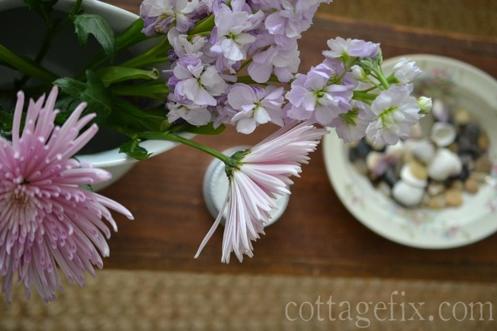 Cottage Fix blog - fugi mums and delphinium