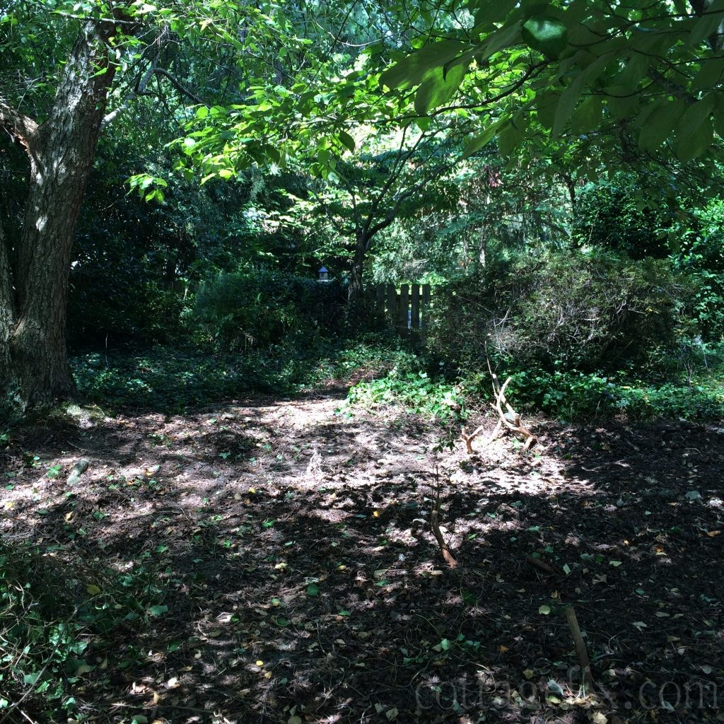 Cottage Fix blog - side garden getting ready for a stepping stone path