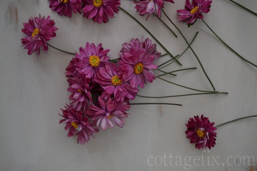 Cottage Fix blog - bright pink late summer bloomers