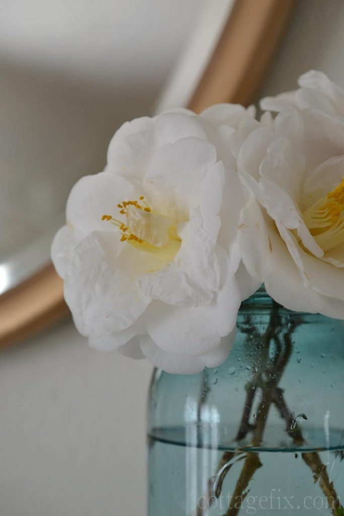 Cottage Fix blog - camellias