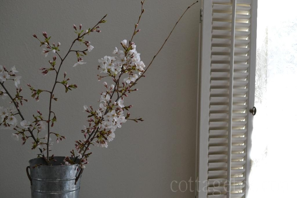 Cottage Fix blog - cherry blossoms