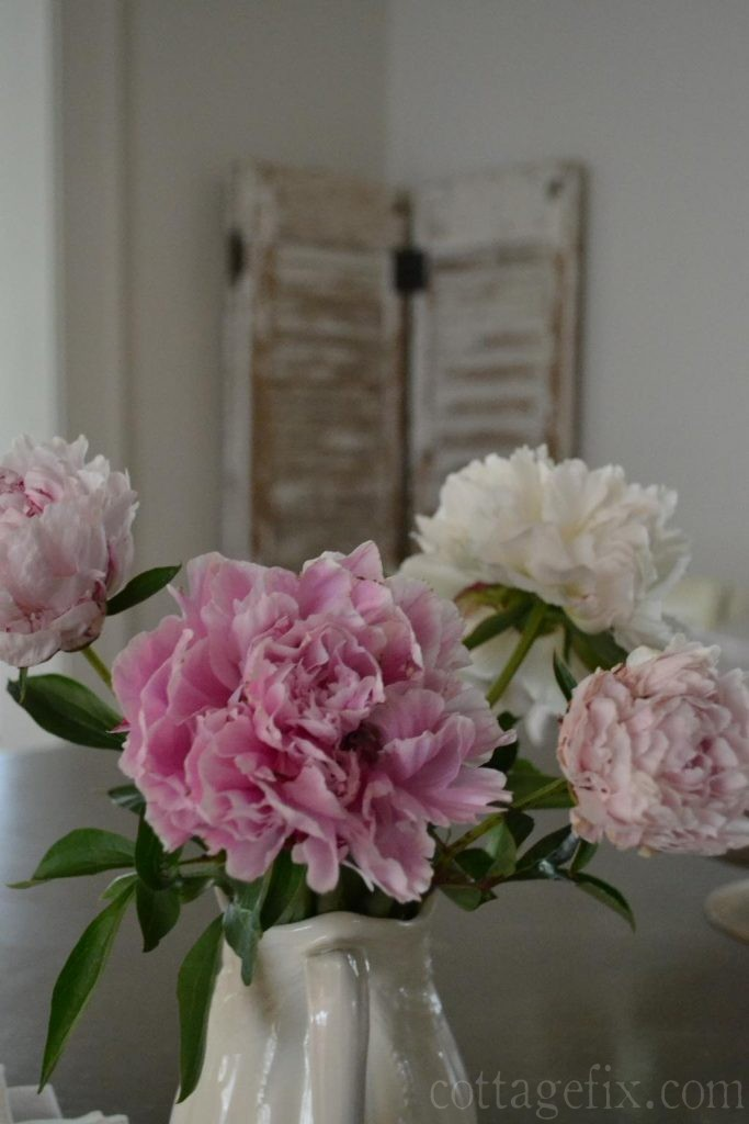 Cottage Fix blog - peonies Friday flowers