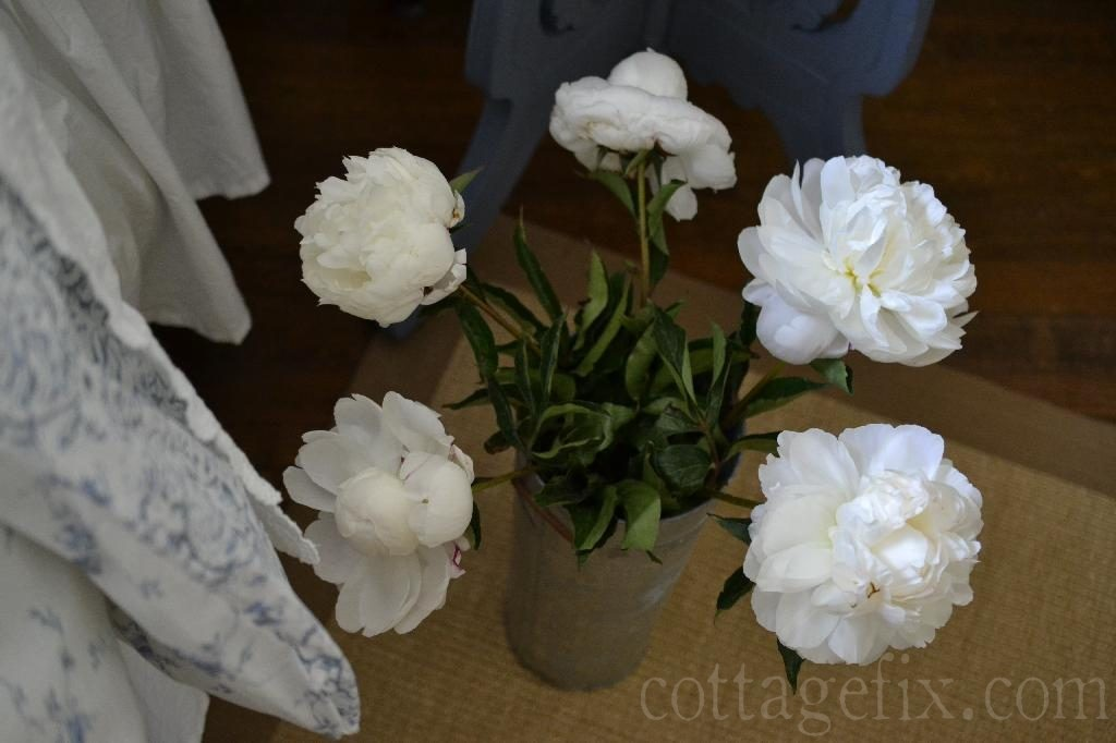Cottage Fix blog - white peonies