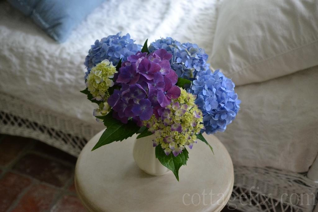 Cottage Fix blog - hydrangea color