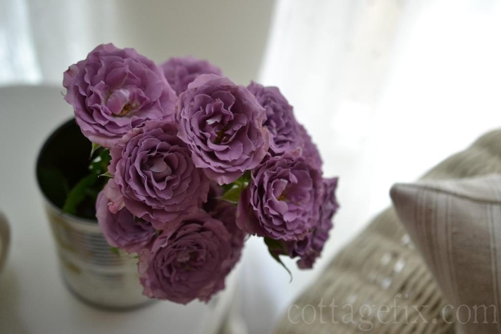 Cottage Fix blog - lavender roses