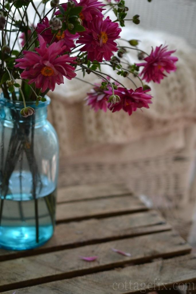 Cottage Fix blog - Friday flowers, bright pink blooms with orange centers