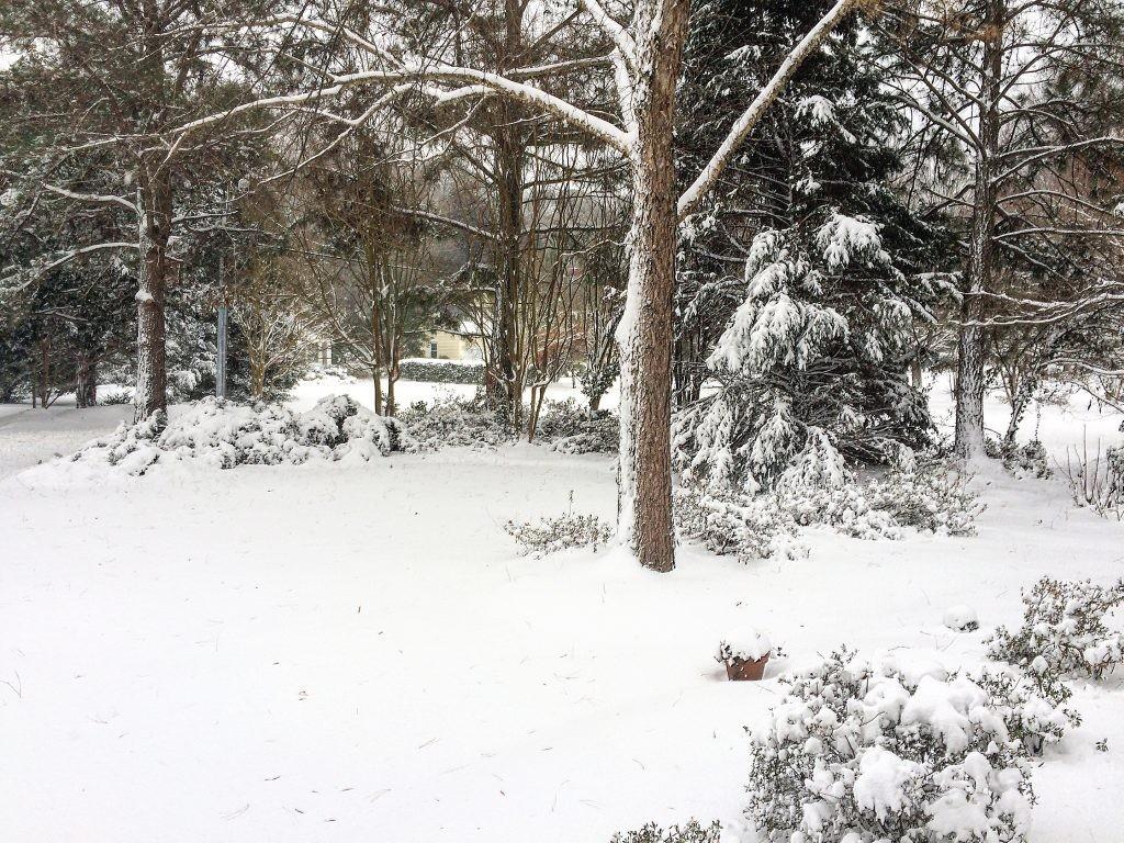 Cottage Fix blog - East Coast snow storm