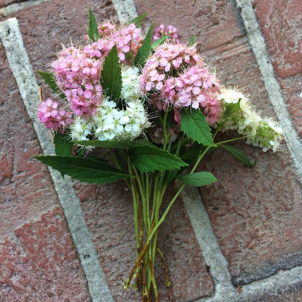 Cottage Fix blog - pink blooms and brickwork