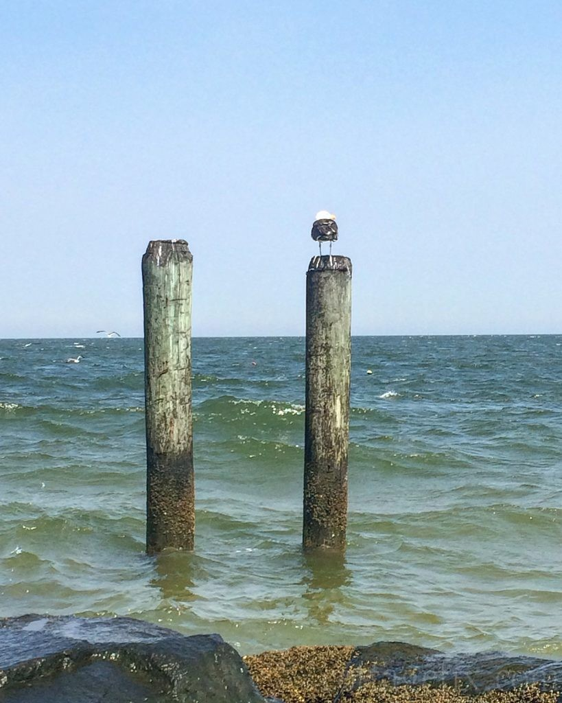 Cottage Fix blog - beachy view